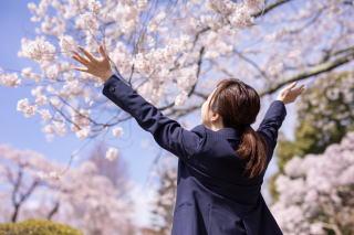 桜に期待を寄せる